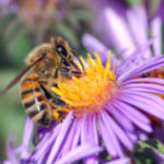 Support Hard Working Pollinators